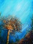 Meraviglie del mare